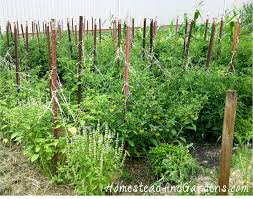 tomato cages stakes or trellises which is best homestead