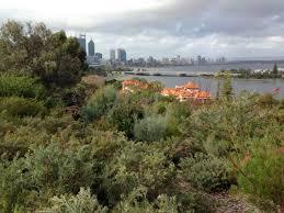 australian native plants perth australian natives u2013 janna schreier garden design