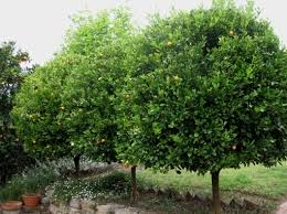 evergreen trees for small es best 25 trees ideas on