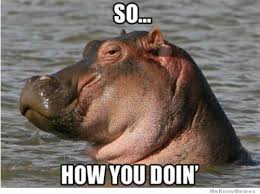 What You Doing Meme - so how you doing hippo weknowmemes