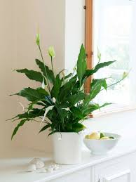 best low light house plants 32 beautiful indoor house plants that are also easy to maintain