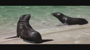 Weather At Six Flags Nj Six Flags Great Adventure Welcomes 2 Sea Lion Pups Abc13 Com