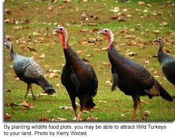 maryland u0027s wild acres crops