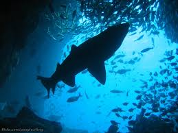 the fishes habitats u0026 adaptation fish in their environments