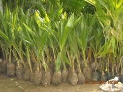 indoor outdoor ornamental plants manufacturer from ajmer