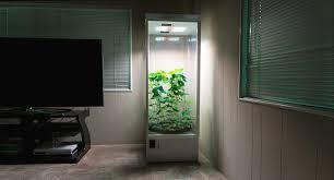 chambre de culture interieur chambre de culture cannabis interieur 100 images chambre de