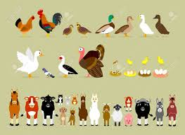 cute cartoon farm animal characters including birds hen rooster