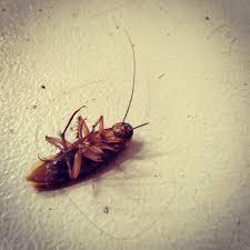 roaches terminix pest control