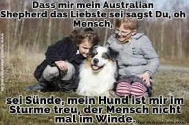 sprüche hund treue australian shepherd zitate und sprüche