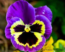 yellow purple flowers u2013 savingourboys info