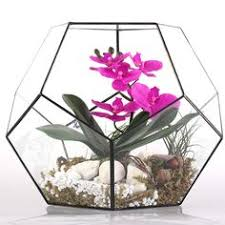amazon succulents amazon com triangular prism geometric glass hydroponic terrarium