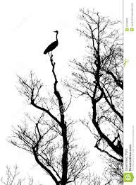 silhouette tree with bird stock photo image of leafless 12378900