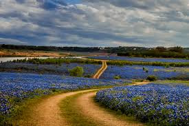 where to see the best bluebonnets in 2017 u2014 jason weingart photography