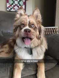 Birthday Dog Meme - 1000 ideas about happy birthday dog meme on pinterest funny