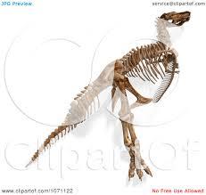 dinosaur skeleton joint clipart free dinosaur skeleton joint clipart