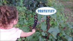 Poisonous Berries Wk 194 6 Bratayley Youtube