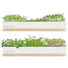 micro green kits growing kit sprouting kit uncommongoods