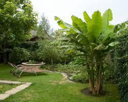 backyard with lounge chairs and banana trees growing banana