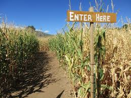 Denver Botanic Gardens Corn Maze 7 Colorado Corn Mazes To Explore Including Fritzler