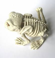 posable halloween skeleton frog toad amphibian skeleton halloween party decoration prop for