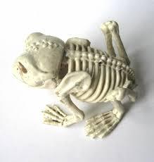 halloween posable skeleton frog toad amphibian skeleton halloween party decoration prop for