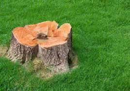tree stump removal ins and outs best pick reports