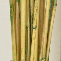 Decorative Bamboo Sticks River Cane For Sale Bamboo Canes For Sale Decorative Bamboo Poles