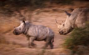 sle resume journalist position in kzn wildlife ezemvelo accommodation going going gone saving africa s rhinos from extinction