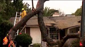 50 foot tree crashes into elderly s burbank home cbs los