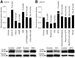 interplay of chemical neurotransmitters regulates developmental
