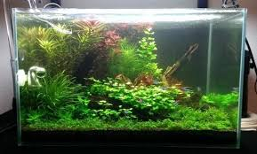 Aquascape Design Apk App Aquascape Design Ideas For Ios Download Android Apk