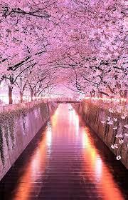 japan flower tunnel wisteria flower tunnel in tochigi japan pink pinterest