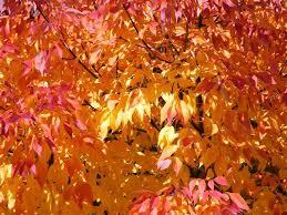 peak fall colors starting oregon washington bruce