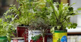 money saving tricks to grow a vegetable garden