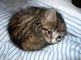 sleep tonight kitty cat animal