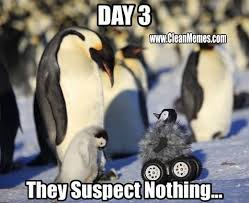 Funny Penguin Memes - suspect nothing penguin clean memes