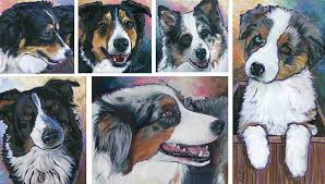 australian shepherd youtube herding australian shepherd archives national purebred dog day