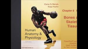 Anatomy And Physiology Coloring Workbook Chapter 6 Principles Of Human Anatomy 12th Edition Gallery Human Anatomy Image