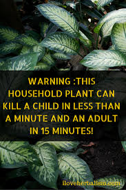 warning this household plant can kill a child in less than a