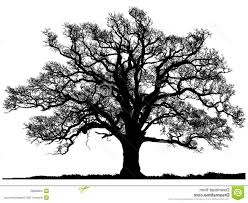 best free silhouette oak tree isolated white background design
