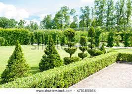 shaped topiary green trees hedge stock photo 475165564