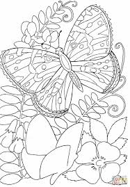 drawings of butterflies and flowers draw8 info