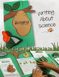 best 25 butterfly life cycle ideas on pinterest butterfly