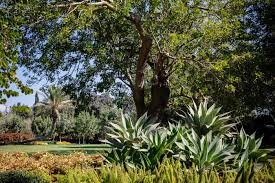 australian native plants for rock gardens video and photos israel u0027s top 10 public gardens israel21c