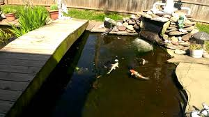 my fish pond in my backyard youtube