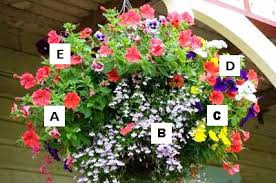 Plant Combination Ideas For Container Gardens Container Garden Recipes A Petunia B Lobelia C Marigold
