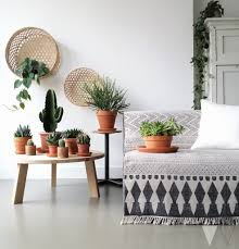 indoor cactus garden ideas to display your collection in a