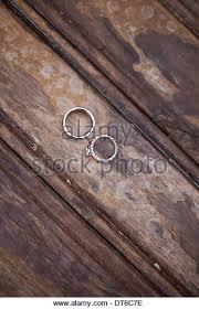 wood rings stock photos wood rings stock images alamy
