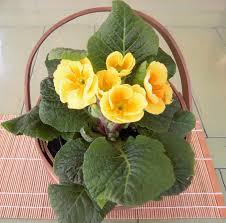 indoor flowering plants eye appealing gifts for older people help aging parents