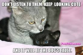 Silly Cat Memes - keep looking cute funny cat meme